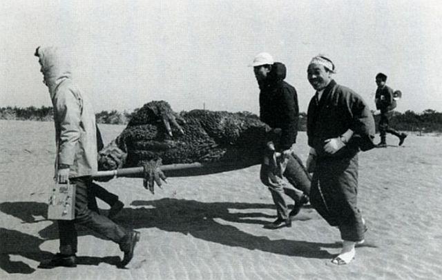 Mothra vs. Godzilla 01