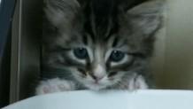 Cathood 690